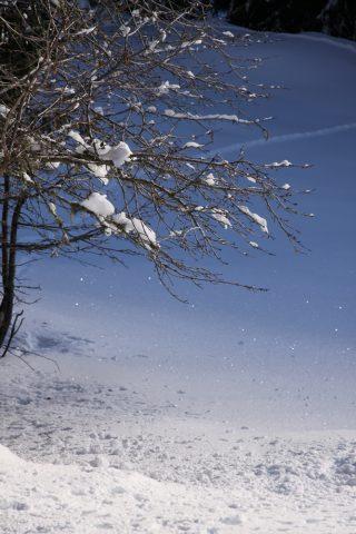 Composition hivernale