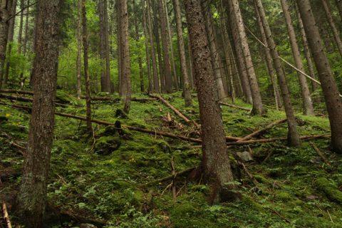 Forêt - La Cretta