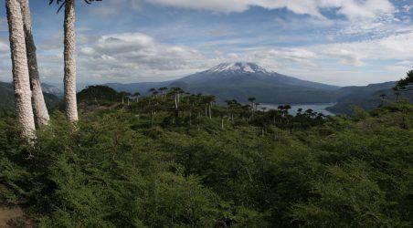 Lac et volcan Conguillo