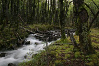 Petite rivière près de El Chaltén