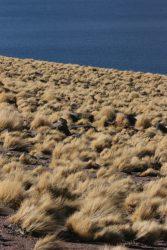 Rive du lac Miscanti au Chili